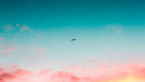 Take the sky replacement photography challenge on GoSocial